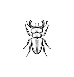 beetle hand drawn sketch icon vector image