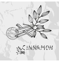 Hand drawn cinnamon vector