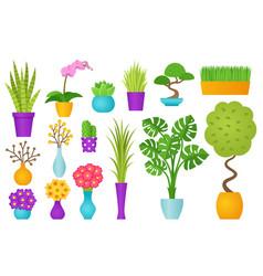 indoor plant in pot vector image