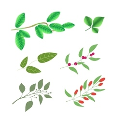 Set of green brunches with leaves and berries vector