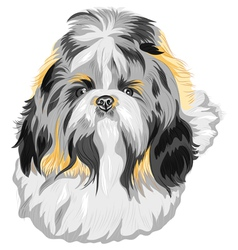 Shih Tzu dog vector