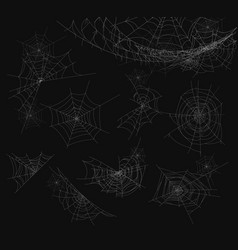 spider web isolated on vector image