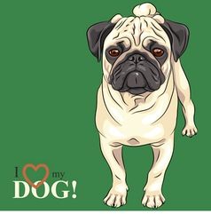 dog serious fawn pug breed vector image