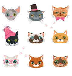 Set of funny cats heads of different breeds vector