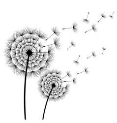two stylized decorative flower dandelion vector image