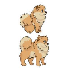 Cute cartoon pomeranian dog clipart vector