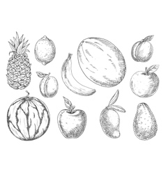 Delicious tropical and local fruits sketch icons vector image