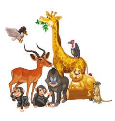 Many wild animals on white background vector