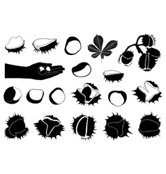 set of different horse chestnuts vector image vector image