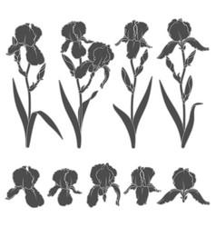 set with iris flowers vector image