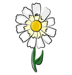 simple daisy flower on white background vector image