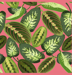 tropical green leaves of maranta and dieffenbachia vector image