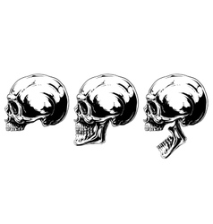 Graphic black and white human skull projection set vector image vector image