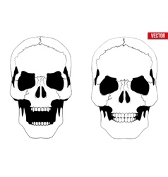 Human skull with open mouth in sketch style vector image vector image
