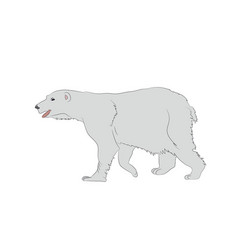 a polar bear which stands vector image