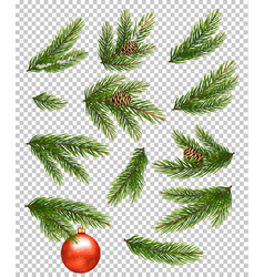Christmas decorations fir branches pine conifer vector