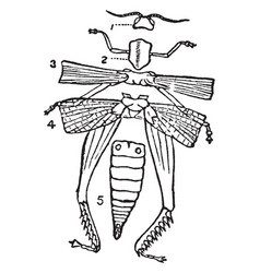 diagram external structure an insect vector image