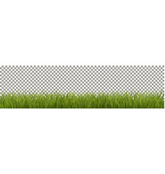 Isolated green grass vector