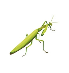Mantis symbol of fighting style vector