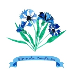 Card with cornflowers vector image