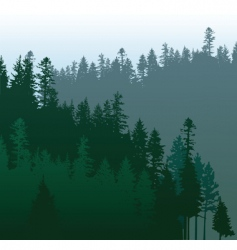coniferous forest vector image