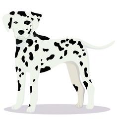 Dalmatian dog vector
