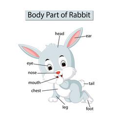 Diagram showing body part rabbit vector
