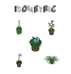 Isometric flower set of blossom grower flowerpot vector