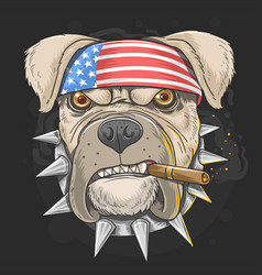 pitbull america flag head punk vector image