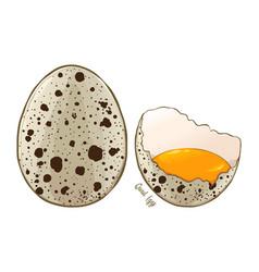 Quail eggs hand drawn vector