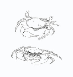vintage crab drawing hand drawn monochrome vector image