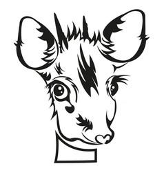 stencil of die cutting baby deer head vector image