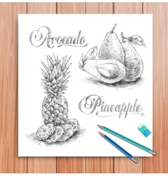 realistic sketch of fruits avocado and vector image