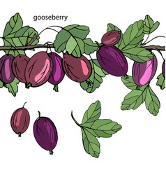 endless horizontal border with ripe berries vector image