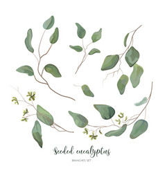 Eucalyptus seeded silver green designer art vector