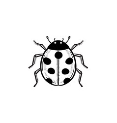 Ladybug hand drawn sketch icon vector