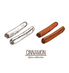 spice collection cinnamon sticks hand drawn vector image
