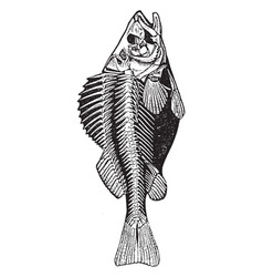 The skeleton of a fish vintage vector