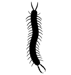 A black centipede vector
