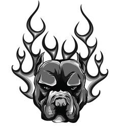 bulldog fire logo icon vector image