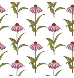 colored echinacea seamless pattern vector image