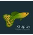 Aquarium fish Guppy isolated vector image vector image