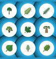 flat icon bio set of spruce leaves oaken hickory vector image vector image