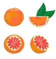 grapefruit fruits vector image vector image