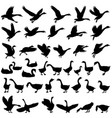 silhouettes of gooses vector image vector image