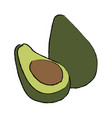 avocado tropical fruit green vitamins vector image