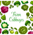 cabbage leafy vegetables poster vector image vector image