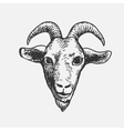Goat Face vector image