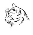 sleeping cat contour head vector image vector image