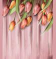 tulips flowers on wooden texture watercolor vector image vector image